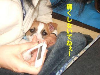 DSCF0728☆.jpg