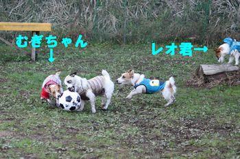 コピー ~ IMG_3803.jpg