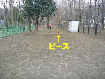 コピー ~ P1000295.JPG