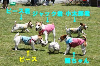 コピー ~ yumi 059.jpg