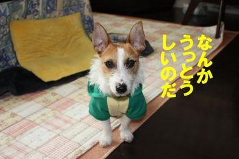 コピー ~ yumi 136.jpg