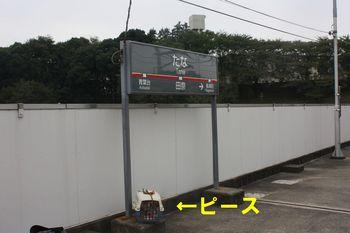 IMG_7112 - コピー.JPG