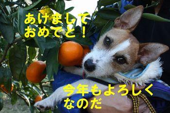 IMG_8070 - コピー.JPG