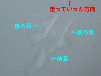 P1010843 - コピー.JPG