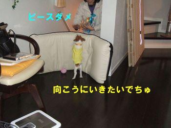 ★DSCF0862.JPG